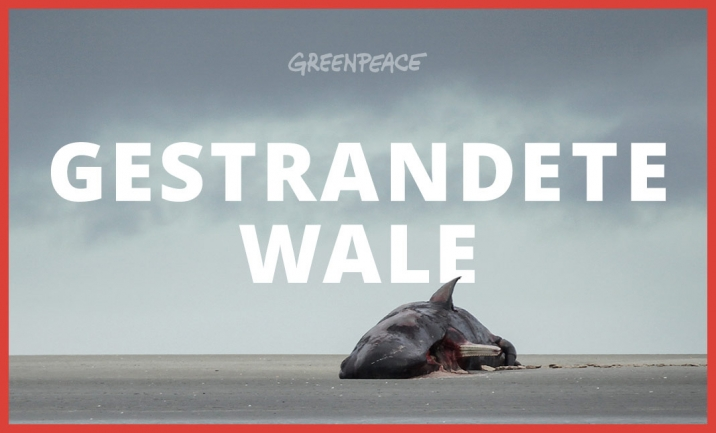 Greenpeace: Stranded Whales website