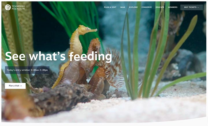 Tennessee Aquarium website